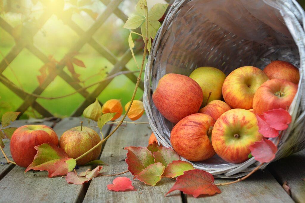 apples, leaves, fall-1776744.jpg